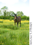 Лошадь на лугу. Стоковое фото, фотограф Татьяна Кахилл / Фотобанк Лори