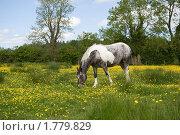 Лошадь в поле. Стоковое фото, фотограф Татьяна Кахилл / Фотобанк Лори
