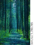 Купить «Таинственный лес», фото № 1780785, снято 11 мая 2010 г. (c) Вероника Галкина / Фотобанк Лори