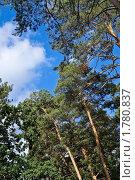 Купить «Сосновый лес», фото № 1780837, снято 17 июня 2010 г. (c) Игорь Митов / Фотобанк Лори