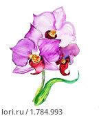 Три цветка фиолетовой орхидеи. Стоковая иллюстрация, иллюстратор Екатерина Букреева / Фотобанк Лори