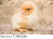 Купить «Цыпленок», фото № 1786045, снято 6 июня 2010 г. (c) Заева Наталия / Фотобанк Лори