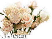 Букет сухих белых роз. Стоковое фото, фотограф Дарья Мирошникова / Фотобанк Лори