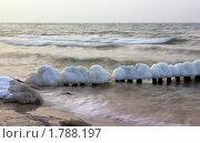 Зимние грибочки. Стоковое фото, фотограф Шадров Юрий / Фотобанк Лори