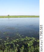 Летний пейзаж. Стоковое фото, фотограф Владимир Далецкий / Фотобанк Лори