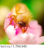 Майский жук. Стоковое фото, фотограф Мария Калиниченко / Фотобанк Лори