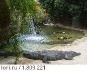 Крокодил пытается вылезти на песок. Стоковое фото, фотограф Татьяна Карпова / Фотобанк Лори