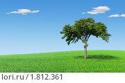 Купить «Одинокое дерево на лугу», фото № 1812361, снято 22 сентября 2019 г. (c) Бондарь Александр Николаевич / Фотобанк Лори