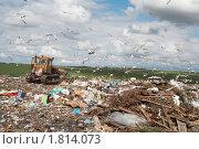 Купить «Городская свалка», фото № 1814073, снято 29 мая 2009 г. (c) Евгений Дорофеев / Фотобанк Лори