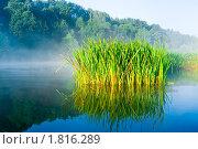 Осока. Стоковое фото, фотограф Сергей Бавыкин / Фотобанк Лори