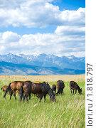 Купить «Выпас лошадей», фото № 1818797, снято 19 июня 2010 г. (c) Александр Подшивалов / Фотобанк Лори