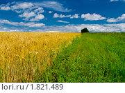 Купить «Поле», фото № 1821489, снято 25 июля 2009 г. (c) Владимир Шеховцев / Фотобанк Лори