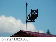 Купить «Указатель ветра. Сова.», фото № 1823005, снято 19 июня 2010 г. (c) Сычёва Татьяна / Фотобанк Лори