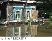 Купить «Кошка на завалинке в наводнение», фото № 1827817, снято 26 июня 2010 г. (c) Free Wind / Фотобанк Лори