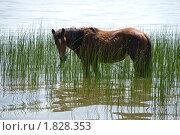 Купить «Лошади в летную жару», фото № 1828353, снято 22 июня 2010 г. (c) Александр Подшивалов / Фотобанк Лори