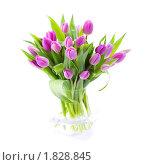 Купить «Розовые тюльпаны», фото № 1828845, снято 30 апреля 2010 г. (c) Наталия Кленова / Фотобанк Лори