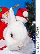 Белый кролик  в новогоднем костюме. Стоковое фото, фотограф Ирина Кожемякина / Фотобанк Лори