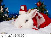 Купить «Белый кролик  в новогоднем костюме», фото № 1840601, снято 10 июля 2010 г. (c) Ирина Кожемякина / Фотобанк Лори