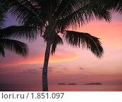 Малайзия. Пляж. Пальма. Закат. (2007 год). Стоковое фото, фотограф Мария Закржевская / Фотобанк Лори