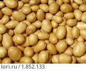 Купить «Молодой картофель», фото № 1852133, снято 20 июля 2010 г. (c) Бондарь Александр Николаевич / Фотобанк Лори