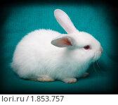 Купить «Кролик домашний», фото № 1853757, снято 19 мая 2010 г. (c) Василий Вишневский / Фотобанк Лори