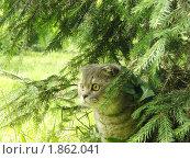 Кот под ёлкой. Стоковое фото, фотограф Евгений Тучков / Фотобанк Лори