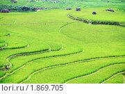 Рисовое поле в Северном Вьетнаме (2009 год). Стоковое фото, фотограф Ольга Хорошунова / Фотобанк Лори