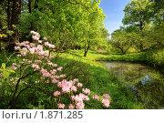 Купить «Весенний пейзаж с цветущим рододендроном и прудом», фото № 1871285, снято 21 мая 2010 г. (c) Дмитрий Яковлев / Фотобанк Лори