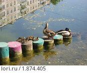 Разноцветные ступеньки. Стоковое фото, фотограф Татьяна Гомонова / Фотобанк Лори