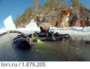 Купить «Дайвинг во льдах, Белое море», фото № 1879205, снято 2 апреля 2009 г. (c) Некрасов Андрей / Фотобанк Лори