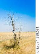 Засуха. Стоковое фото, фотограф Сергей Бавыкин / Фотобанк Лори