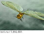 Стрекоза. Стоковое фото, фотограф Юлия Казакова / Фотобанк Лори