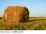 Купить «Тюк сена», фото № 1893037, снято 26 июня 2010 г. (c) Черников Роман / Фотобанк Лори