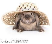 Купить «Карликовый кролик в соломенной шляпе», фото № 1894177, снято 4 августа 2010 г. (c) Юлия Машкова / Фотобанк Лори