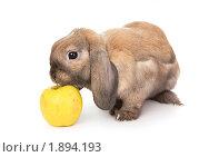 Купить «Карликовый кролик нюхает желтое яблоко», фото № 1894193, снято 4 августа 2010 г. (c) Юлия Машкова / Фотобанк Лори