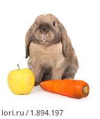 Купить «Карликовый кролик с морковкой и яблоком», фото № 1894197, снято 4 августа 2010 г. (c) Юлия Машкова / Фотобанк Лори