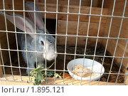 Купить «Серый кролик в клетке», фото № 1895121, снято 9 августа 2010 г. (c) Екатерина Овсянникова / Фотобанк Лори