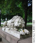 Купить «Лев с розой в зубах», фото № 1897189, снято 20 июля 2010 г. (c) Евгения Плешакова / Фотобанк Лори
