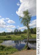 Весенний пейзаж с березами и соснами водой и отражением. Стоковое фото, фотограф Виталий Горелов / Фотобанк Лори
