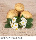 Купить «Цветы и клубни картофеля на мешковине», эксклюзивное фото № 1903733, снято 22 июля 2010 г. (c) Шичкина Антонина / Фотобанк Лори