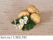 Купить «Цветы и клубни картофеля на мешковине», эксклюзивное фото № 1903741, снято 22 июля 2010 г. (c) Шичкина Антонина / Фотобанк Лори
