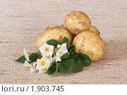 Купить «Цветы и клубни картофеля на мешковине», эксклюзивное фото № 1903745, снято 22 июля 2010 г. (c) Шичкина Антонина / Фотобанк Лори