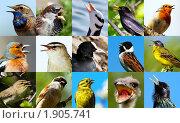 Купить «Поющие птицы», фото № 1905741, снято 9 мая 2009 г. (c) Василий Вишневский / Фотобанк Лори