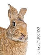 Купить «Кролик», фото № 1906853, снято 7 августа 2010 г. (c) Дмитрий Калиновский / Фотобанк Лори