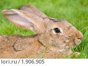 Купить «Кролик», фото № 1906905, снято 7 августа 2010 г. (c) Дмитрий Калиновский / Фотобанк Лори