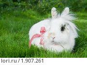 Купить «Белый кролик», фото № 1907261, снято 31 июля 2010 г. (c) Дмитрий Калиновский / Фотобанк Лори