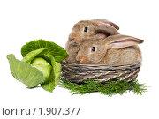 Купить «Два кролика в корзине и кочан капусты», фото № 1907377, снято 11 августа 2010 г. (c) Дмитрий Калиновский / Фотобанк Лори
