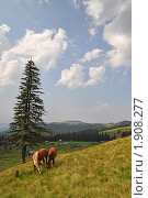 Лошади на горном склоне. Стоковое фото, фотограф Швадчак Василий / Фотобанк Лори