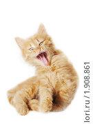 Купить «Маленький пушистый котенок», эксклюзивное фото № 1908861, снято 22 июля 2010 г. (c) Ольга Визави / Фотобанк Лори