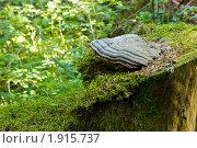 Трутовик и мох. Стоковое фото, фотограф Денис Петров / Фотобанк Лори